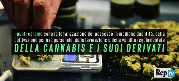 """""""I vantaggi della legalizzazione della cannabis"""""""